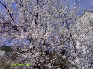 Весна время перво-цветов