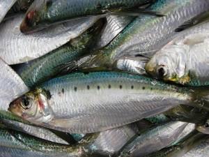Рыба Селёдка Вкусно и полезно