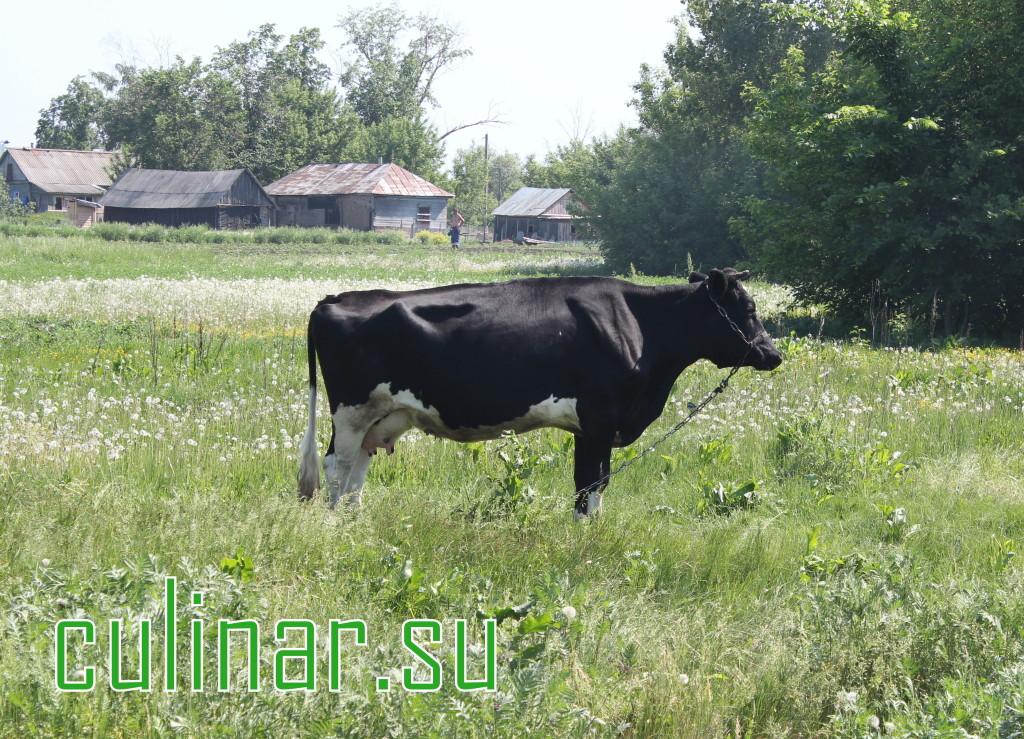 Молоко польза: вредно ли вам пить молоко